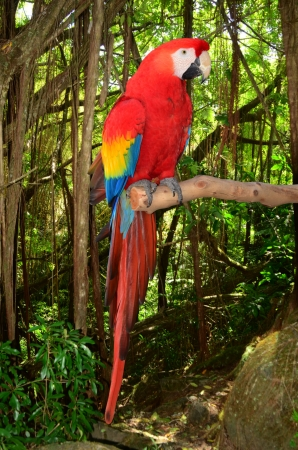 A photo of a macaw parrot perched in a branch in the tropical jungle