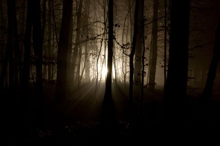 thriller: mysterious dark forest with light shining through trees Stock Photo