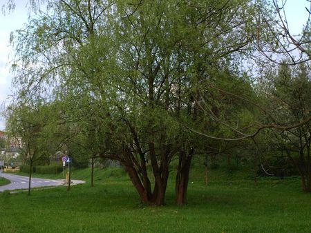 greenness: Tree