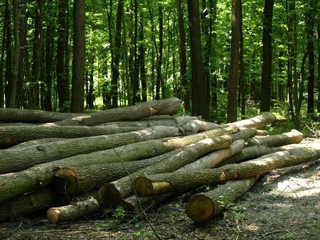 greenness: Cutted trees in forest