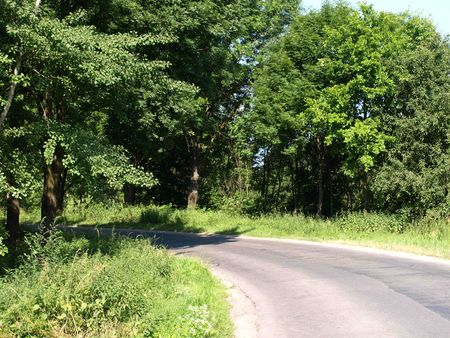 greenness: Road and greenness