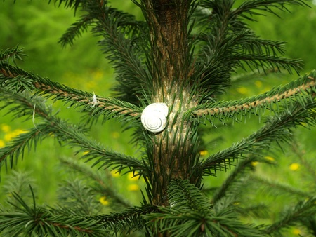 Snail on pine tree Stock Photo