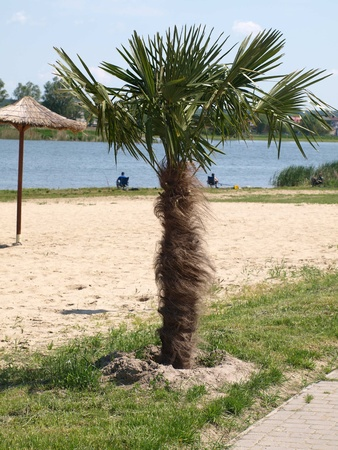 Palm tree and two fishermans in the background Stock Photo