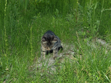 Young cat on green grass