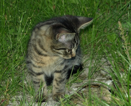 Cat on grass Stock Photo