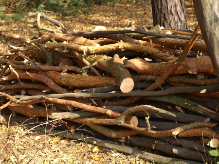 cutted: Cutted branches of tree
