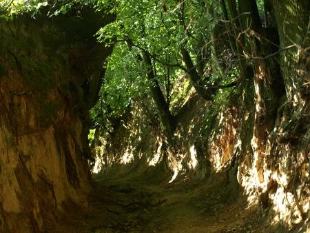 kazimierz dolny: Ravine Root s in Kazimierz Dolny, Poland