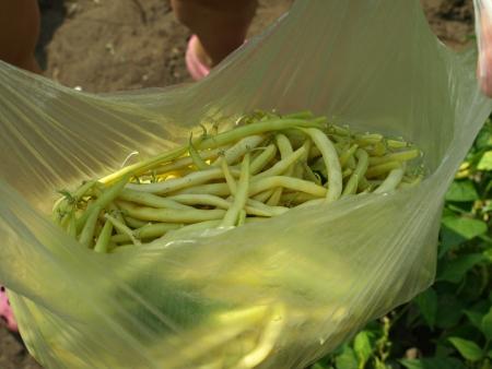 String bean in bag