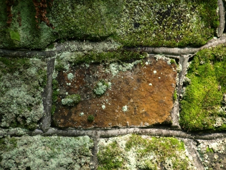 Old stoned wall detail witf green moss