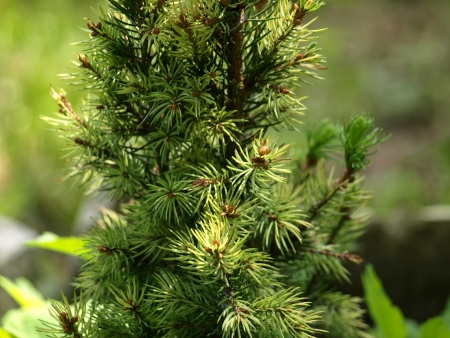 Details of pine tree Stock Photo - 17471274