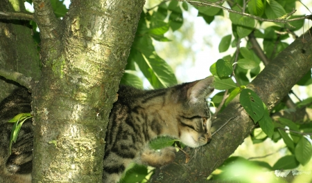 Young cat on tree