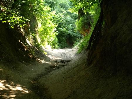 Korzeniowy Ravine in Kazimierz Dolny, Poland