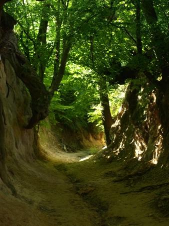 kazimierz dolny: Korzeniowy Ravine in Kazimierz Dolny, Poland