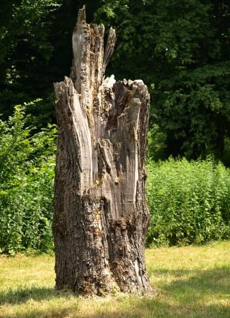 trunk  tree: Tronco de ?rbol
