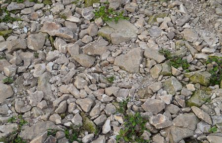 Stones and small plants