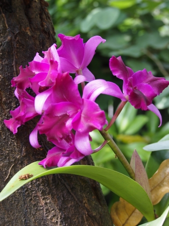 orchid house: Orchid grown at my house Stock Photo