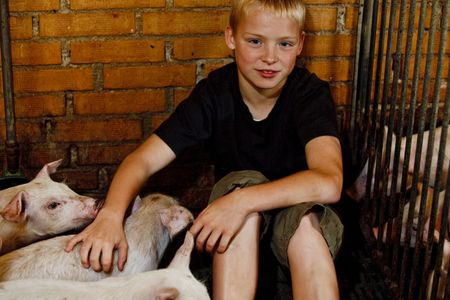 Young boy surrounded by pigs in a pig farm photo