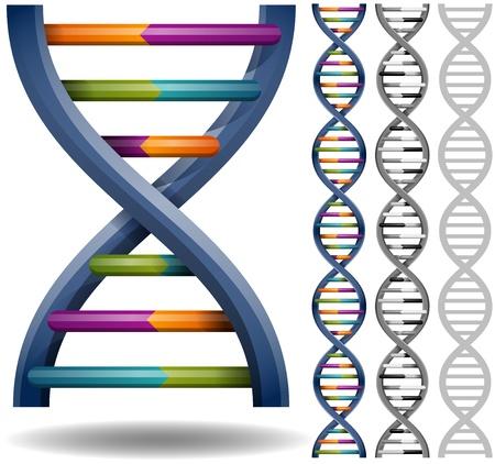 adn humano: ADN