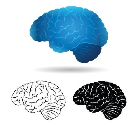 Brain Stock Vector - 17808053