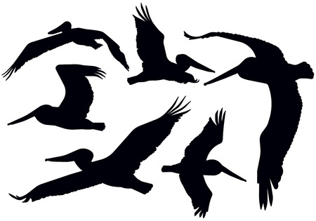 Detailed flying pelican silhouettes. Çizim