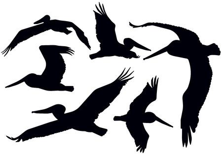 Detailed flying pelican silhouettes. Иллюстрация