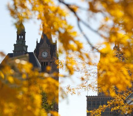 clocktower: Autumn clocktower seen through yellow leaves.