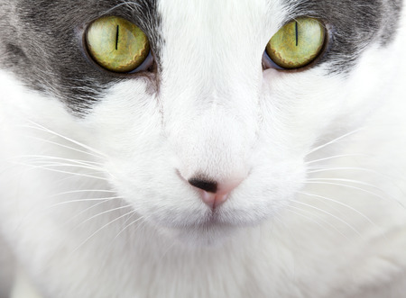 White and Gray cat up close.