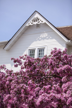 White home gable and pink crab tree flowers. Stock fotó