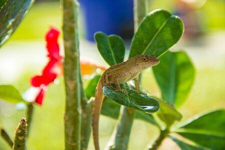 Lizard sitting on a leaf