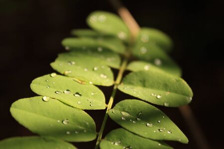 Water drops on a leafy plant Stock Photo