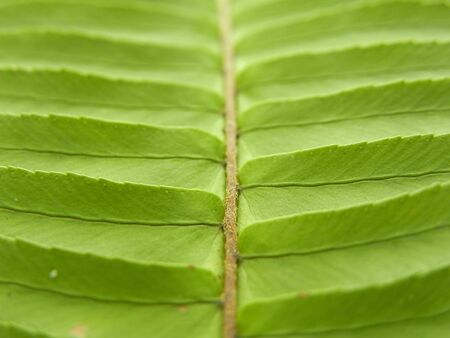 Closeup of green leafy plant Stock Photo