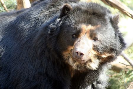 Black Bear having fun photo