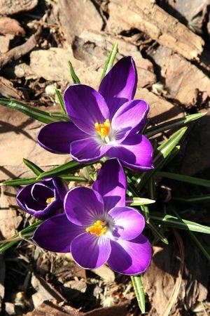 Blooming Floraison au d�but du printemps  Banque d'images