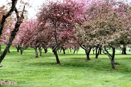 Blooming Spring Trees in New York City Stock Photo - 360136