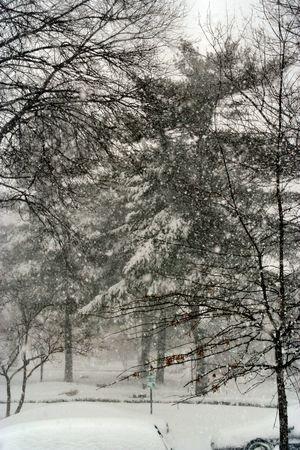 Snow day Stock Photo - 361331