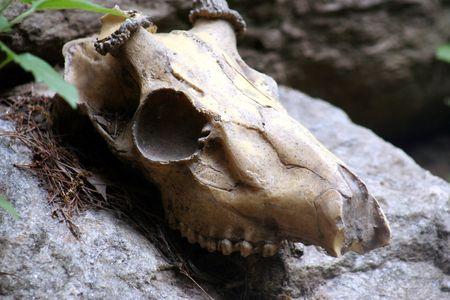 skull Stock Photo - 395172