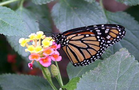 Butterfly Reklamní fotografie