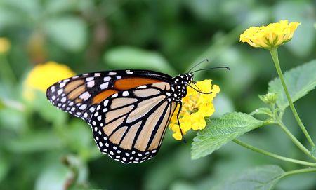 Papillon dans le jardin Banque d'images