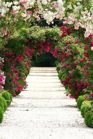 roses in the garden: In the Garden Stock Photo
