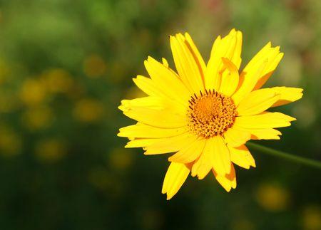 Summer in the Garden photo
