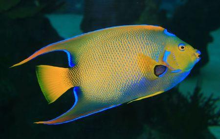 A Coral fish
