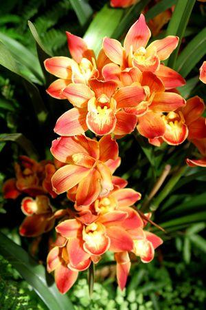 Orchid�es Blooming beaut� dans le jardin au printemps Heure