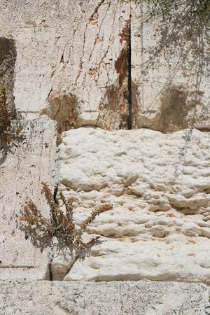 The Wailing Wall (western wall) , Jerusalem, Israel photo