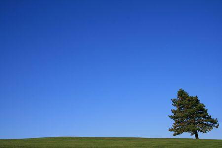 夏の時間で晴れた日の国の風景