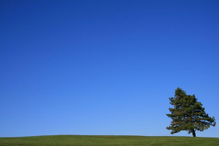 Country Landscape on a clear Day at Summer Time Stock Photo - 3641508
