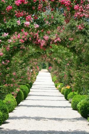 massif de fleurs: Arch roses dans le jardin