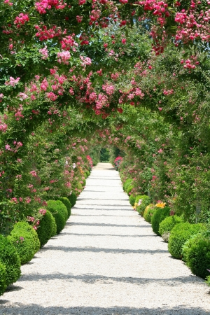 flowerbeds: Roses Arch in the Garden