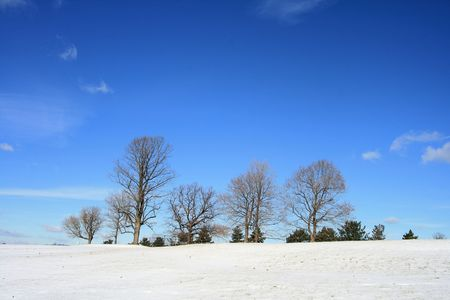 Winter wonderland with snow on hill and trees Stock Photo - 3641711