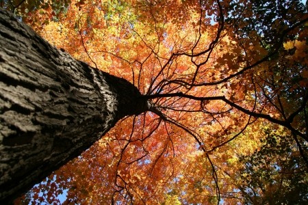 Fall Colors in the Forest on a Clear Day Stock Photo - 3769098
