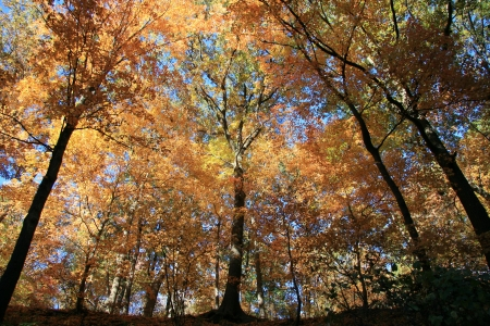 Fall Colors in the Forest on a Clear Day